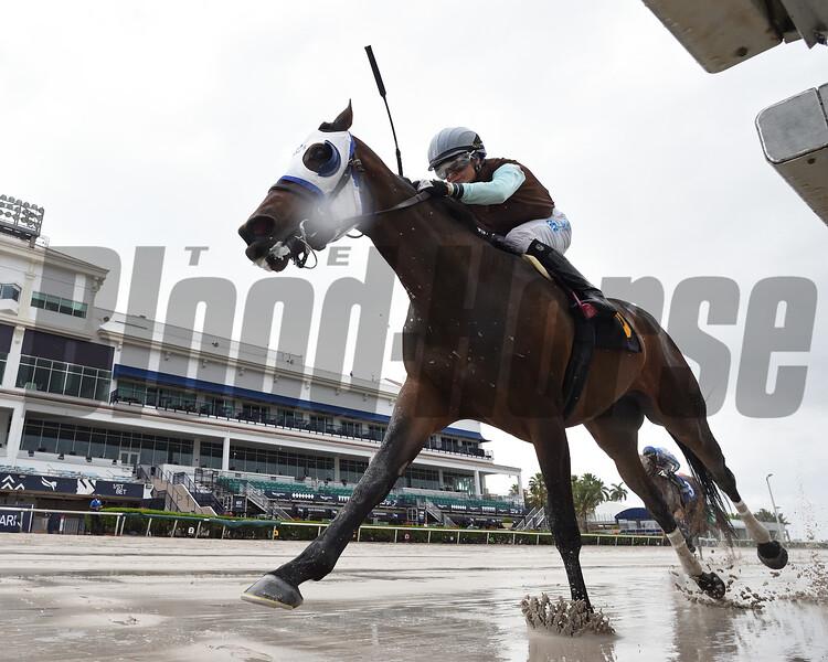 Goodbye Brockley wins an allowance optional claiming race Saturday, April 18, 2020 at Gulfstream Park. Photo: Coglianese Photos/Ryan Thompson