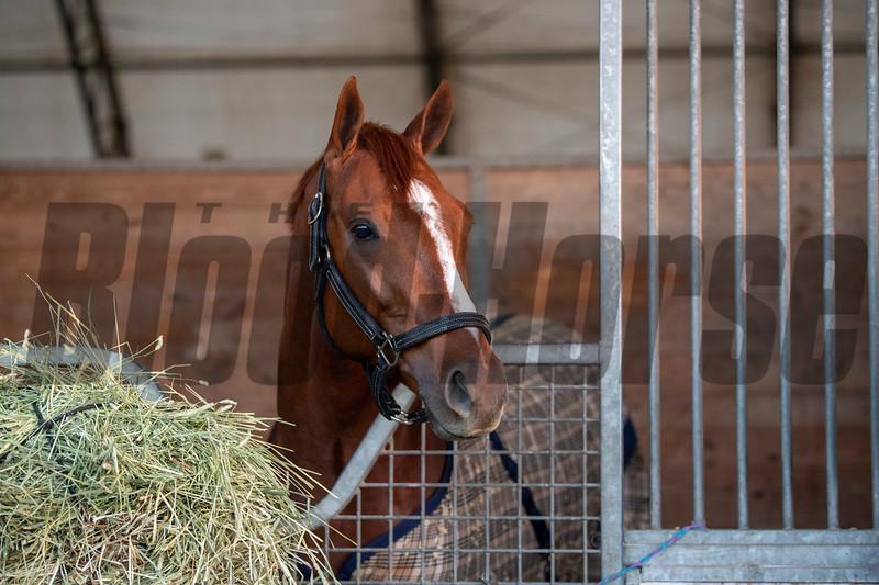 Henley's Joy at Gulfstream Park, January 21, 2020<br /> Joe DiOrio Photo