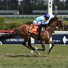 Getmotherarose wins the 2020 Honey Fox Stakes at Gulfstream Park<br /> Coglianese Photos