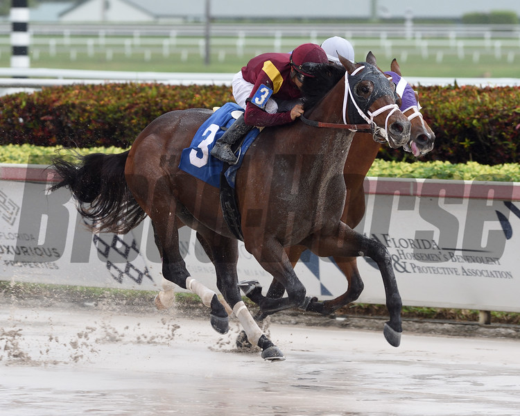 Money Moves wins a maiden special weight February 15, 2020 at Gulfstream Park. Photo: Coglianese Photos/Ryan Thompson