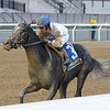 Montauk Traffic wins 2020 Jimmy Winkfield Stakes at Aqueduct Racetrack. Photo: Coglianese Photos/Joe Labozzetta