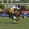 Sister Otoole - Maiden Win, Gulfstream Park, March 26, 2020<br /> Coglianese Photos/Lauren King