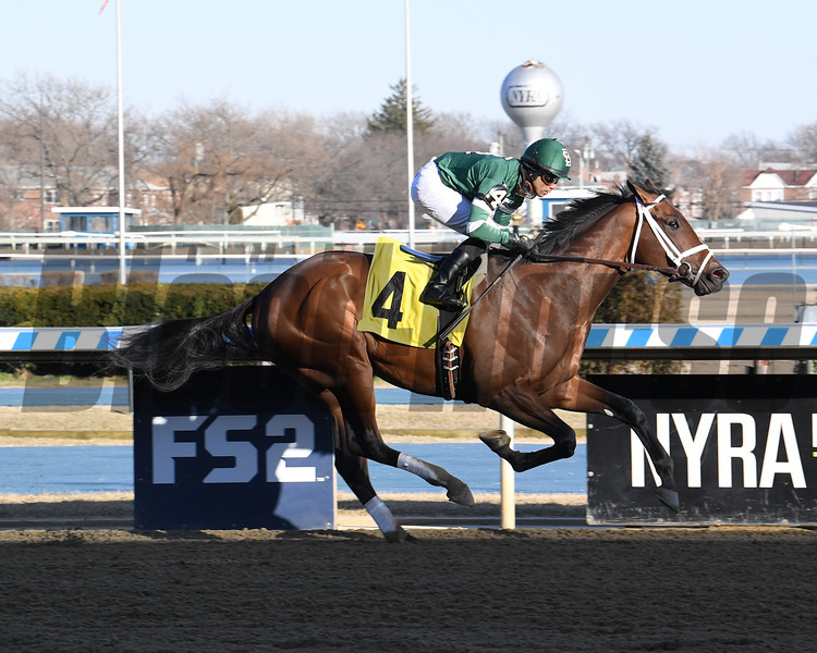Jerry the Nipper wins a maiden special weight February 22, 2020 at Aqueduct Racetrack. Photo: Coglianese Photos