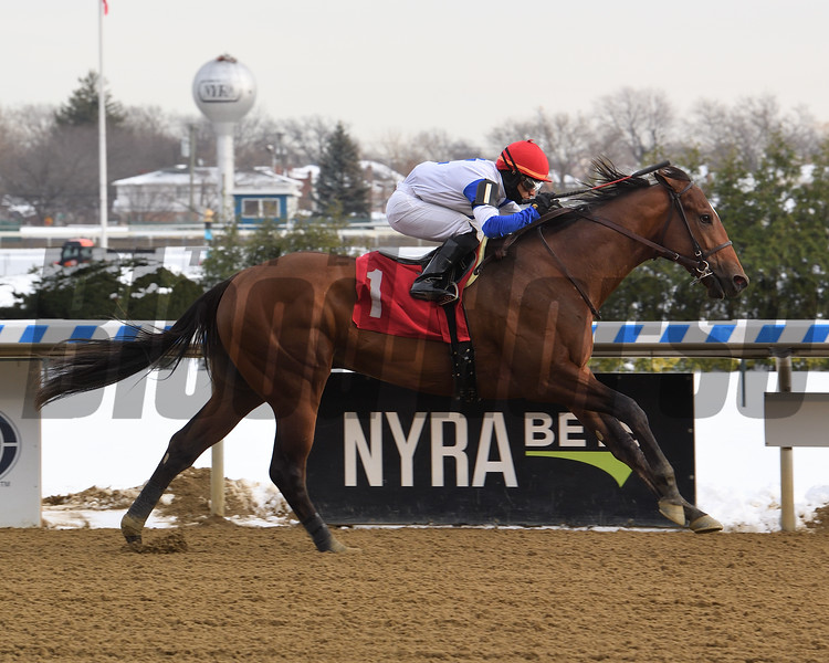 By George wins maiden special weight Saturday, December 19, 2020 at Aqueduct. Photo: Coglianese Photos