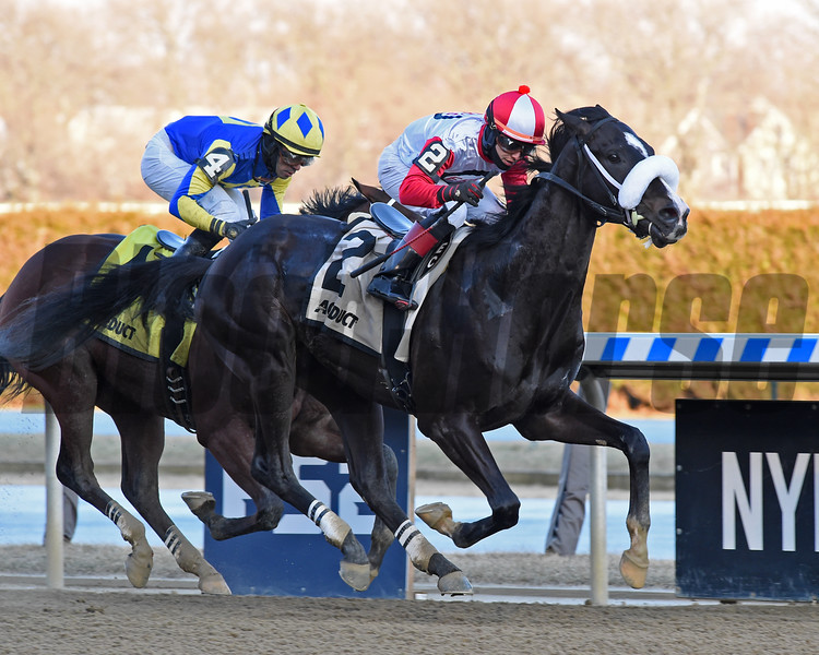 Chowda wins the Gander Stakes February 16, 2020 at Aqueduct. Photo: Coglianese Photos/Chelsea Durand