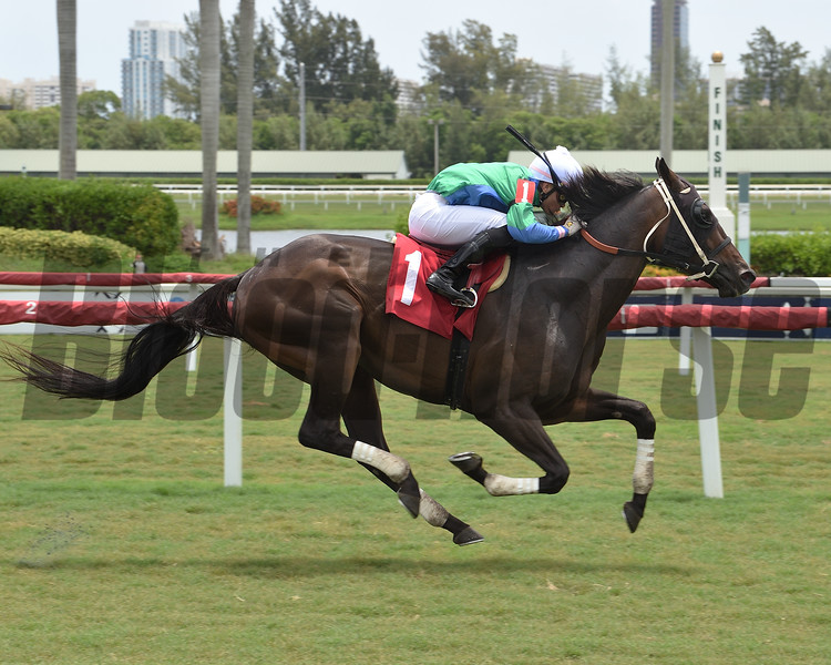 Winter's Wonder wins maiden special weight July 5, 2020 at Gulfstream Park. Photo: Coglianese Photos/Lauren King