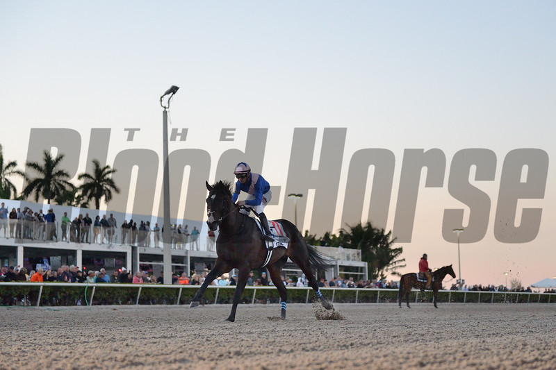 Ete Indien wins 2020 Fountain of Youth Stakes. Photo: Coglianese Photos