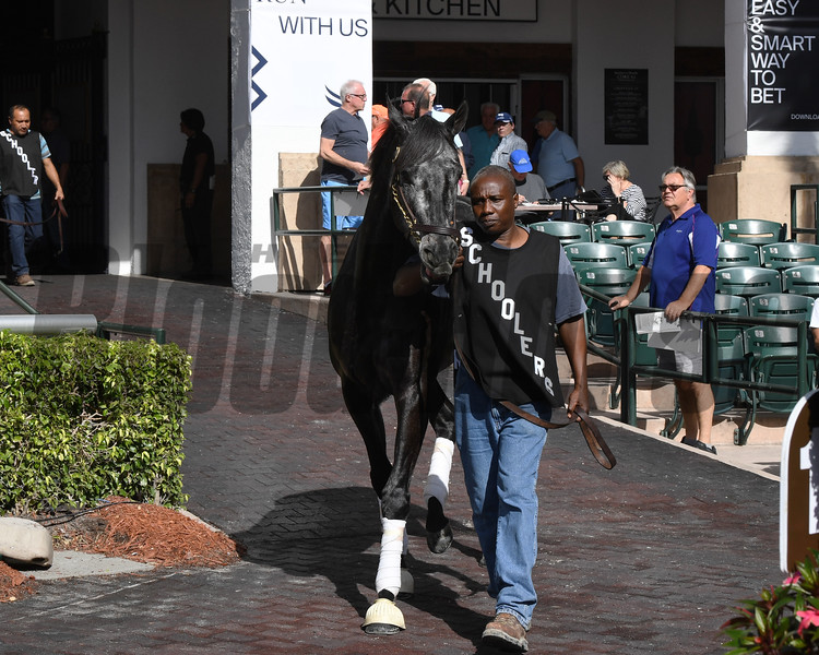 Gray Magician schooling at Gulfstream Park, January 24, 2020<br /> Coglianese Photos