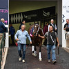 Tenfold - Gulfstream Park, January 24, 2020<br /> Coglianese Photos