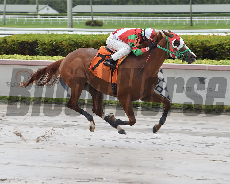 Mane Attraction wins a maiden special weight Sunday, May 24, 2020 at Gulfstream Park. Photo: Coglianese Photos/Lauren King