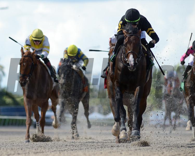 Casino Grande - AOC, Gulfstream Park, May 16, 2020<br /> Coglianese Photos/Ryan Thompson