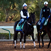 Midnight Bisou - King Abdulaziz Racetrack, Riyadh - February 28, 2020<br /> Photo: Katsumi Saito