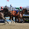 Will Sing for Wine wins maiden special weight Saturday, March 7, 2020 at Aqueduct. Photo: Coglianese Photos