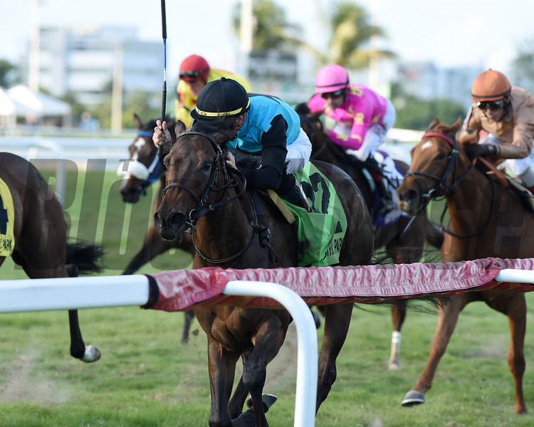 She's My Type wins the 2020 Ginger Brew Stakes at Gulfstream Park<br /> Coglianese Photos/Ryan Thompson