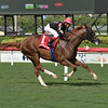 Sailing Solo wins the 2020 Mecke Stakes at Gulfstream Park<br /> Coglianese Photos/Lauren King
