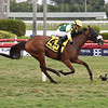 Cheermeister wins the 2020 Sweetest Chant at Gulfstream Park<br /> Coglianese Photos