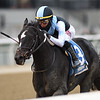 Independence Hall wins the 2020 Jerome at Aqueduct<br /> Coglianese Photos/Chelsea Durand