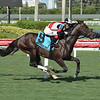 Givemetwenty wins the 2020 Not Surprising Stakes at Gulfstream Park<br /> Coglianese Photos/Lauren King