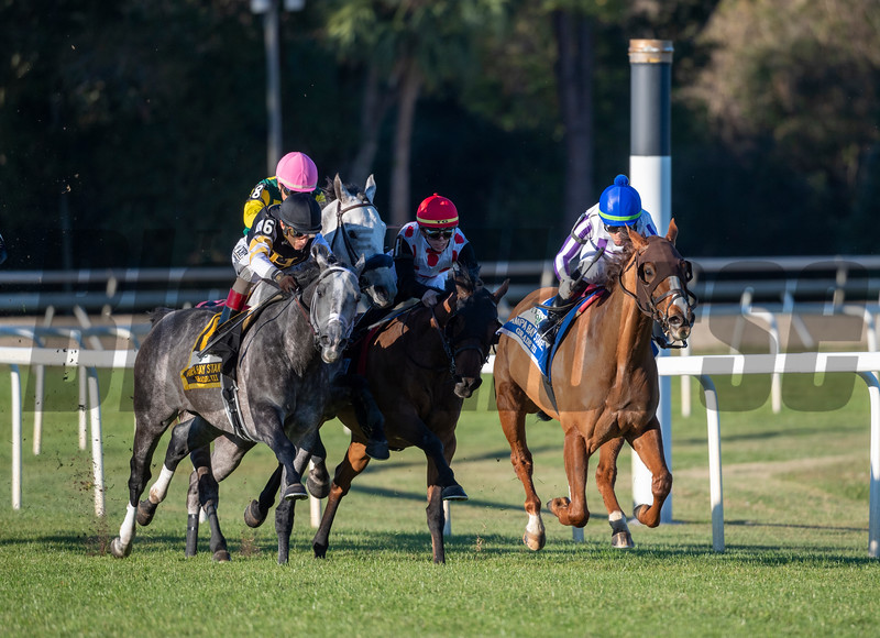 Admiralty Pier wins 2020 Tampa Bay Stakes at Tampa Bay Downs. Photo: Joe DiOrio