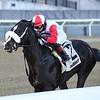 Chowda wins the Gander Stakes February 16, 2020 at Aqueduct. Photo: Coglianese Photos/Joe Labozzetta