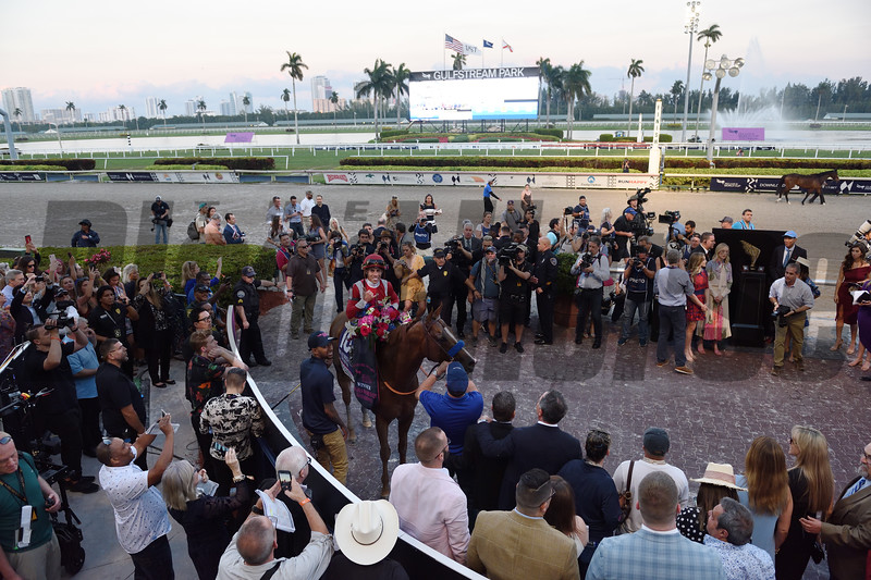 Mucho Gusto wins 2020 Pegasus World Cup Invitational at Gulfstream Park. Photo: Coglianese Photos/Jamie Coulter