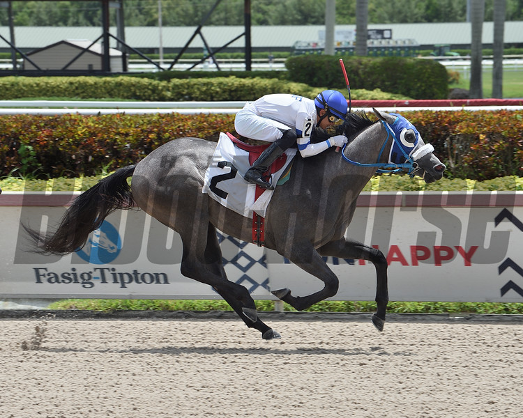 Mister Leonardo wins a maiden claiming race July 10, 2020 at Gulfstream Park. Photo: Coglianese Photos/Lauren King