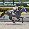 Mister Leonardo wins a maiden claiming race July 10, 2020 at Gulfstream Park. Photo: Coglianese Photos/Lauren King