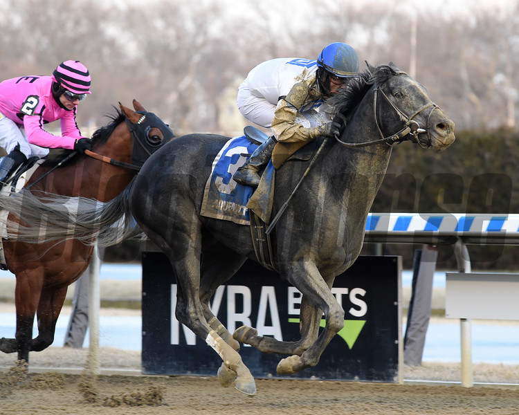 Montauk Traffic wins 2020 Jimmy Winkfield Stakes at Aqueduct Racetrack. Photo: Coglianese Photos/Chelsea Durand