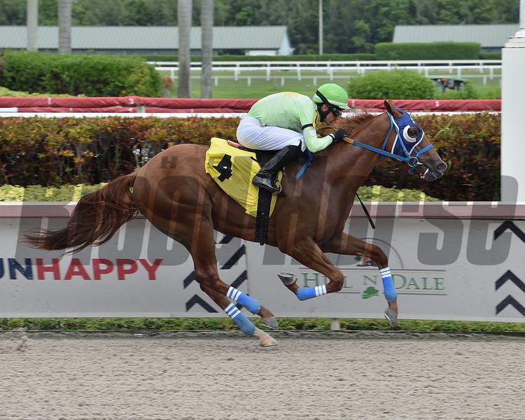 Papetu - Maiden Win, Gulfstream Park, June 20, 2020. Photo: Coglianese Photos/Lauren King