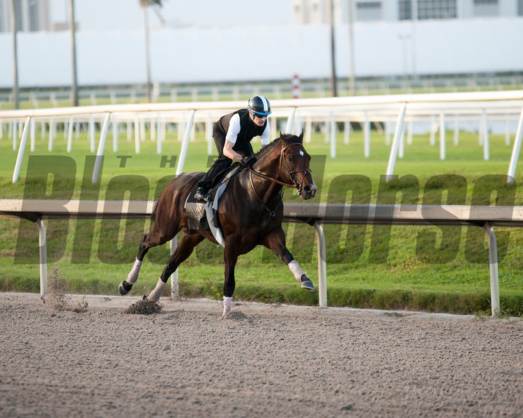 Omaha Beach works Julien Leparoux  & Richard Mandella at Gulfstream Park  January 12, 2020. Photo: Joe DiOrio