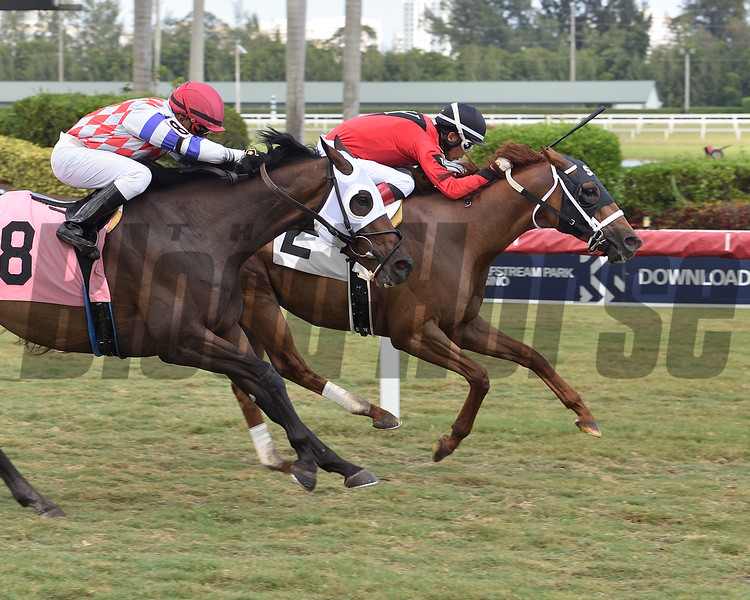 Tiger Blood - AOC, Gulfstream Park, April 24, 2020<br /> Coglianese Photos/Lauren King