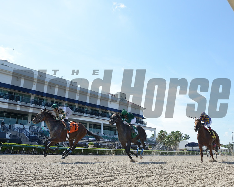 Sole Volante wins an allowance optional claiming race June 10, 2020 at Gulfstream Park. Photo: Coglianese Photos/Ryan Thompson