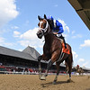 Mutasaabeq - Maiden Win, Saratoga, August 8, 2020<br /> Coglianese Photos