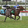 Pechanga - Maiden Win, Gulfstream Park, May 14, 2020<br /> Coglianese Photos/Lauren King