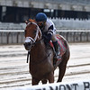 Vekoma wins the 2020 Runhappy Carter Handicap at Belmont Park<br /> Coglianese Photos/Joe Labozzetta