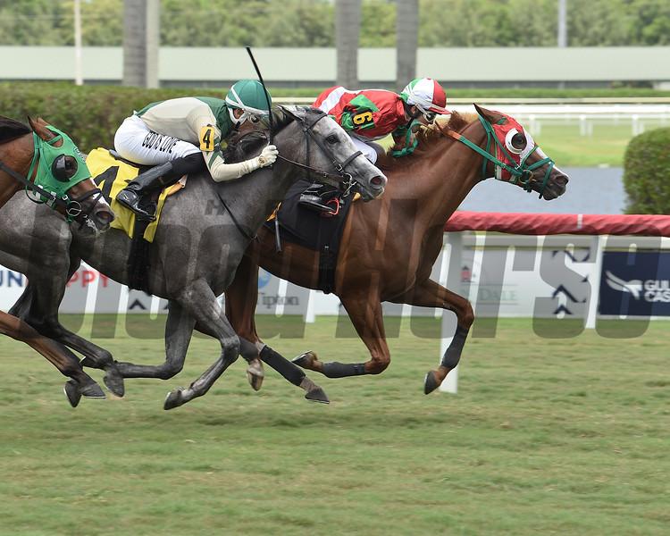 Mane Attraction wins an allowance July 10, 2020 at Gulfstream Park. Photo: Coglianese Photos/Lauren King