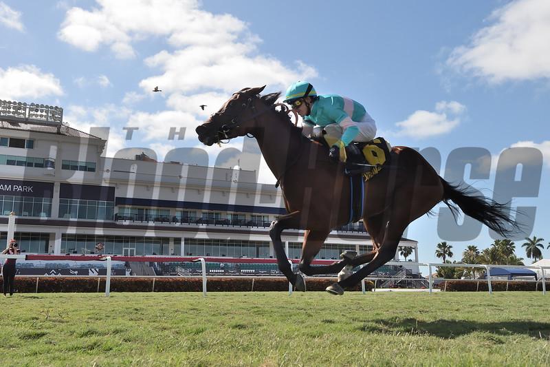 La Signare wins 2020 Sand Springs Stakes at Gulfstream Park. Photo: Coglianese Photos/Ryan Thompson