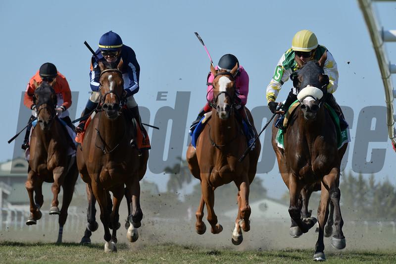 Cheermeister wins the 2020 Herecomesthebride Stakes at Gulfstream Park. Photo: Coglianese Photos