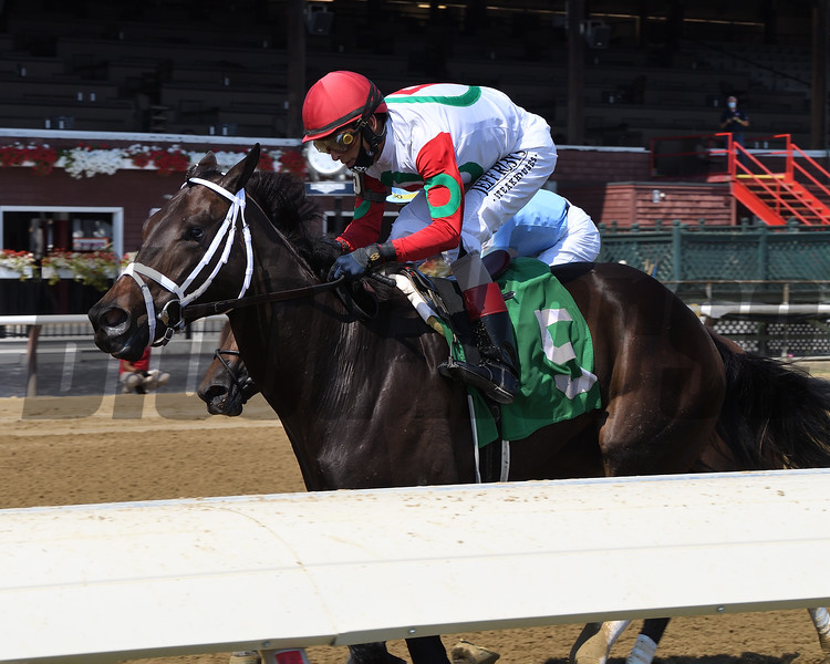 Fifth Risk wins a maiden special weight Sunday, August 23, 2020 at Saratoga Race Course. Photo: Coglianese Photos