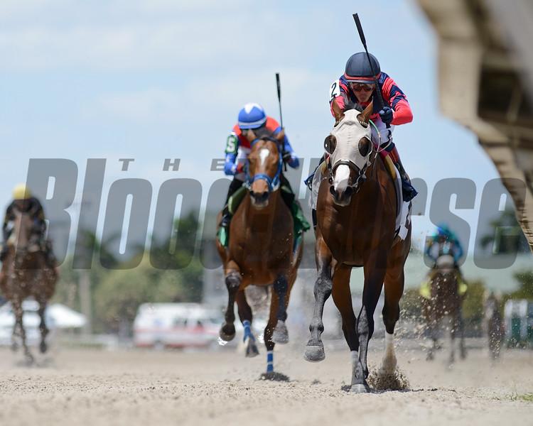 Superfecto - Maiden Win, Gulfstream Park, May 2, 2020<br /> Coglianese Photos/Ryan Thompson