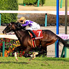 Galore Creek wins the 2020 Spring Stakes at Nakayama Racecourse. Photo: Naoji Inada