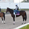 Omaha Beach - Morning - Gulfstream Park - 011920. Photo: Coglianese Photos/Lauren King