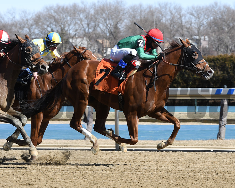 Will Sing for Wine wins maiden special weight Saturday, March 7, 2020 at Aqueduct. Photo: Coglianese Photos/Robert Mauhar