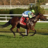 Arrest Me Red wins the 2020 Atlantic Beach Stakes at Aqueduct<br /> Coglianese Photos