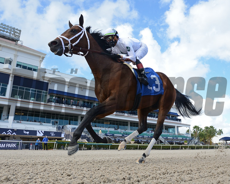 Prime Factor - Maiden Win, Gulfstream Park, December 12, 2020. Photo: Coglianese Photos/Ryan Thompson