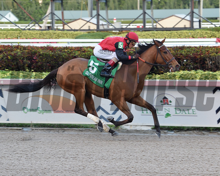 Frank's Rockette wins the 2020 Any Limit Stakes at Gulfstream Park<br /> Coglianese Photos/Lauren King