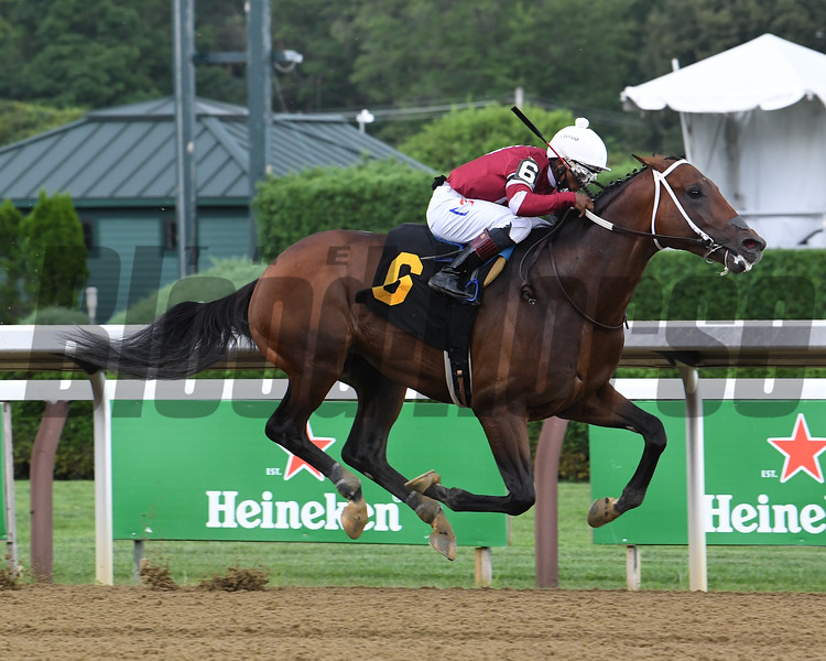 Calibrate wins a maiden special weight Sunday, August 15, 2020 at Saratoga. Photo: Coglianese Photos