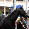 Next Shares - Gulfstream Park, January 24, 2020<br /> Coglianese Photos