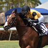 Decorated Invader wins the 2020 Cutler Bay Stakes at Gulfstream Park<br /> Coglianese Photos/Derbe Glass