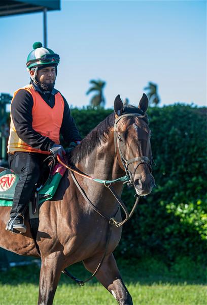 Liam's Lucky Charm  @ Gulfstream Park Feb 28 2020<br /> ©Joe DiOrio/Winningimages.biz